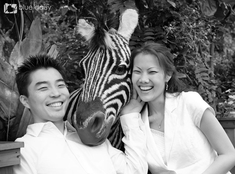 love and laughter and a zebra