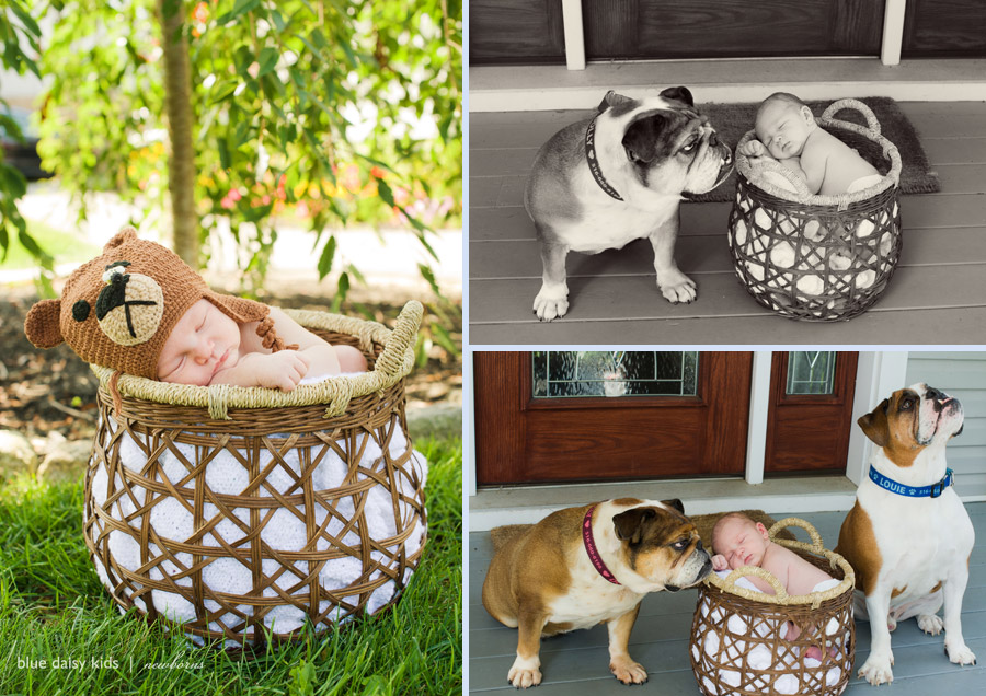 newborn baby boy with English bulldog dogs